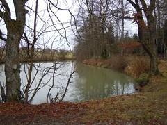Ropbachsee, NGIDn619146863 (naturgucker.de) Tags: deutschland badenwrttemberg naturguckerde chorstschlter ngidn619146863 ropbachsee