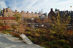 The High Line (SomePhotosTakenByMe) Tags: park city nyc newyorkcity vacation usa newyork building architecture america skyscraper bench downtown chelsea unitedstates manhattan urlaub bank stadt esb architektur empirestatebuilding amerika gebäude highline innenstadt wolkenkratzer