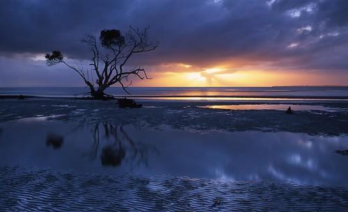 Sunrise Tree by Mark Wassell, on Flickr