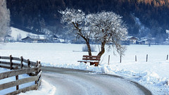 Frostig (mikiitaly) Tags: schnee italy snow day wiesen baum weg sdtirol altoadige klte naturepoetry colorphotoaward colourartaward panoramafotogrfico saariysqualitypictures coth5 sailsevenseas sailsevenseasmaster theoriginalgoldseal musictomyeyeslevel1 rememberthatmoment elementsorganizerwinter