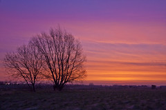 - 18/366 - (Pieter D) Tags: blue trees red sky orange tree sunrise landscape 365 day18 366 project365 pieterd project366 mostly365 3662012 365the2012edition 18012012