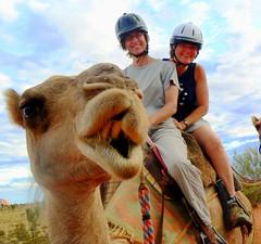 (www.gmedical.com) Tags: travel photography au australia camel outback uluru healthcare downunder ayersrock locumtenens locums healthcarejobs wwwgmedicalcom globalmedicalstaffing internationaldoctorjobs doctorjobs