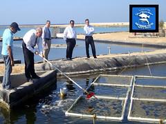 Aquaponics experiment at FFC (Fish Farming Center) Tags: w abdullah   alzahrani