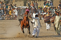 Out Of Controll (AbdulRehman) Tags: pakistan horse sports animal rural force sony punjab mela controll horsedance
