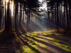 Rays of Light in Sherwood Forest (DaveKav) Tags: nottingham trees forest woodland path olympus explore sherwoodforest nottinghamshire raysoflight rayoflight e510 a614 patchings blinkagain bestofblinkwinners differentperspectives2012