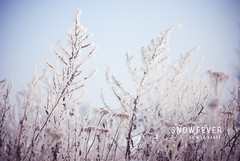 Snowfever (Photography Bart Tanghe) Tags: snow slr ice digital landscape 50mm nikon artistic bokeh d200 nikkor
