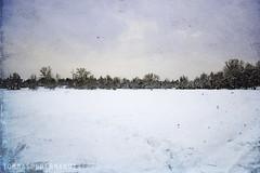 Bianco solo (tg | photographer) Tags: park winter sky parco white snow cold tree ice alberi landscape cielo neve inverno bianco freddo paesaggio ghiaccio forlì