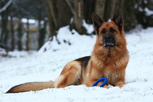 Un chien exceptionnel...