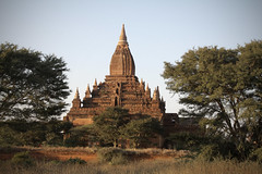 Still Standing Tall (cormend) Tags: old travel trees brown tree green nature grass canon landscape temple eos pagoda asia tour burma stupa buddhist tourist myanmar southeast bagan birmanie 50d cormend
