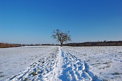 Snowy Landscape (DaveJC90) Tags: uk blue light england sky cloud sun sunlight white snow colour detail tree green beautiful field wow landscape suffolk afternoon view bright snowy path sunny sharp crop lonely 1001nights footpath sharpness wow1 wow2 topshots worldwidelandscapes natureselegantshots panoramafotografico 1001nightsmagiccity theoriginalgoldseal flickrsportal mygearandmediamond allnaturesparadise flickrstruereflection1 flickrstruereflection2