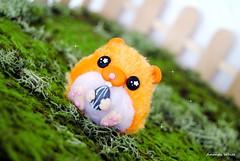 Orange *////* (AmandaWhite13) Tags: orange pet cute little fluffy plush kawaii hamster bjd mascota hamtaro