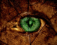 Green eye (in Explore) (Ke Bra) Tags: green eye gesicht grn auge il pupille bildbearbeitung textur