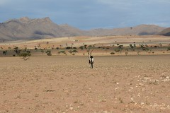 Namib Rand Nature Reserve (zenseas : )) Tags: africa camping wild camp vacation holiday beautiful fun driving desert safari colourful namibia oryx gemsbok selfdrive oryxgazella namibrandnaturereserve selfdrivesafari namibrandfamilyhideout