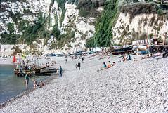 E146 Dorado, Beer, Devon, 1992 (Richard G. Hilsden) Tags: uk england cornwall britain g devon 1992 hilsden richardghilsden