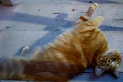 Are you missing a sweet orange cat with green eyes? (Lynn Friedman) Tags: sanfrancisco orange green cat eyes missing tabby 94117 lynnfriedman