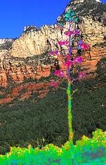 Arrow Tree (r.s.ophir) Tags: arizona broken sedona naturallight trail arrow psychedelic naturephotography digitallyenhanced treeoflove