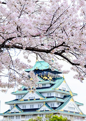 -  (Vince-leo) Tags: plant japan cherry spring    sakura cherryblossoms osaka kansai            fujifilmxe1