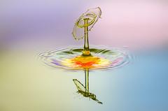 water drop collision (hjuengst) Tags: macro art colorful kunst splash waterdrops makro wassertropfen watersculpture highspeedphotography spritzer farbenfroh liquidart wasserskulptur waterdropphotography tropfenfotografie