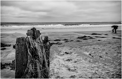 Alnmouth . (wayman2011) Tags: uk people beach mono seaside seascapes northumberland alnmouth canon5d lightroom bwlandscapes wayman2011