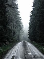 The mist (henrikwallner) Tags: mist nature forest outdoors scary woods nikon gravel naturephotography naturephoto naturephotographer naturfotograf d7000 nikontop