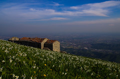 Monte Linzone (SMFREE.72) Tags: flowers light italy mountains nature colors montagne landscape pentax fiori lombardia narciso paesaggio