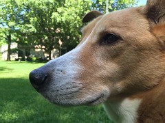 Biscuit (emily.dex48) Tags: dog puppy biscuit