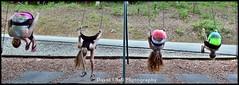 DSC_5370cfd (davids_studio) Tags: park girls girl fun swings teen flip preteen