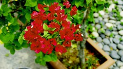 _DSC7323 (noelsoo) Tags: flowers