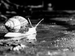 Another Snail's Mile to Go... #Don't Give Up #Flickr Friday (Explored May 25, 2016) (J ...) Tags: flickr friday dont give up