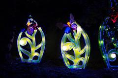 _DSC9632_2 (Elii D.) Tags: light fish flower animal night zoo monkey neon dragons lantern lampion dargon