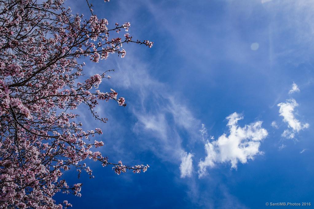 Contra el cielo