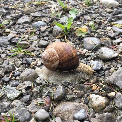 Fant mat på veien i dag, lot den ligge. #liveterbestutensnegler?