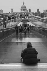 London in black and white #4 (angelocesare) Tags: people blackandwhite dog man london rain cane gente cathedral stpaul bn millenniumbridge persone explore uomo pioggia londra biancoenero leicam9 angeloamboldiphotos