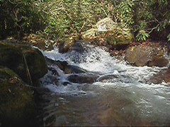 7-Second Video: Corner Rock Creek, Pisgah National Forest (mystuart (on and off)) Tags: autumn nature water creek river geotagged nc video stream carolina pisgahnationalforest usfs 2011 mystuart