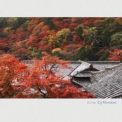 善峯寺 錦秋 (Eiji Murakami) Tags: autumn japan kyoto sigma 京都 日本 秋 foveon sd1 善峯寺 フォビオン