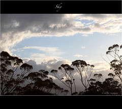 Sky (Ahsan. (Busy..)) Tags: blue newzealand white tree nature clouds skyscape colours canon7d 1755usm doubleniceshot mygearandme blinkagain bestofblinkwinners blinksuperstars