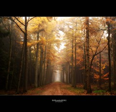 'till the end.... (Zino2009 (bob van den berg)) Tags: autumn trees mist color fall colors fog proud forest bomen mood nebel dream archive line bos wald depth deventer herfstkleuren endless mistig archief kleur perpective diepte lastyear herfs bomenlaan eikelhof zino2009 bobphotography lisaempire