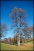 Double-trunk Tree (Ferdi H) Tags: flickrshop