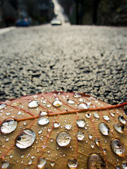 The S100 has landed! [Explored #9] (Jawad Qasrawi) Tags: canon droplets leaf pavement ground powershot explore crops s100 canons100 explored mygearandme mygearandmepremium mygearandmebronze mygearandmesilver mygearandmegold mygearandmeplatinum mygearandmediamond nucleator