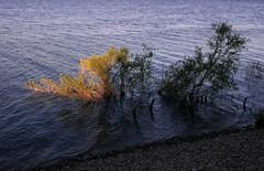 Shadows (Gary Everson) Tags: sun water contrast weeds rocks shadows