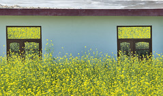 A Room With A View (Shubh M Singh) Tags: flowers windows roof light red india yellow reflections eyes alone peace village symmetry hills d200 minimalism haryana 2011 panchkula morni mustrad madhana