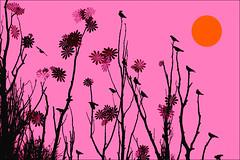 crows decor (*tara) Tags: birds illustration photoshop graphic background crows pinkorange kraaien