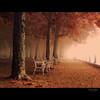 once it comes / egyszer eljön... (heizer.ildi) Tags: hungary niceshot utca természet fa táj köd tájkép város út mfcc balatonfüred ősz canonsx10 blinkagain aboveandbeyondlevel1
