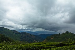 Beautiful Munnar [explored-15-december-2011] (pankaj.anand) Tags: clouds day cloudy kerala teaplantation munnar teaestates 2011 pankajanand pankajanand18