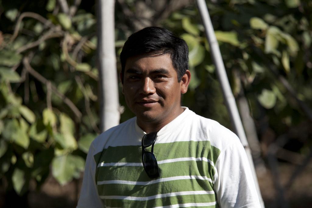 Parcelle mangues, plantation de Manuel J. Urbina BENITES, Santiago PAZ