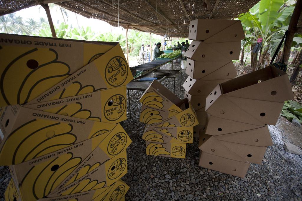 Plantation de bananes - Recolte, conditionnement, etiquettage, emballage