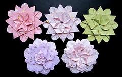 Iimori - Flower