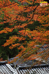 Takao (fravenang) Tags: autumn fall japan temple kyoto    takao   jingoji