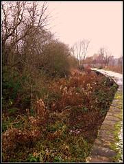 The Cuckoo way. (Steven Ruffles) Tags: overgrown derbyshire canals housing chesterfield picnik pity estaes killamarsh