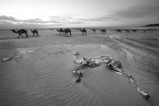 kuwait 2011(Explore.)